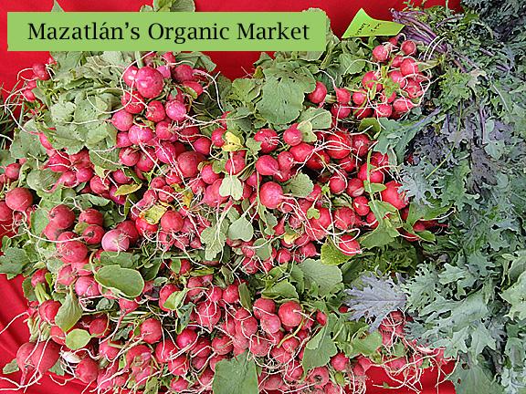 Mazatlan Organic Market Radishes