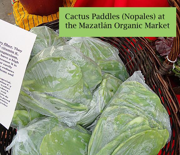 Mazatlan Organic Market Cactus