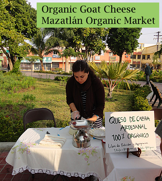 Mazatlan Organic Market Goat Cheese